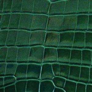 Alligator brillant vert imperial