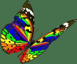 papillon-verbreuil